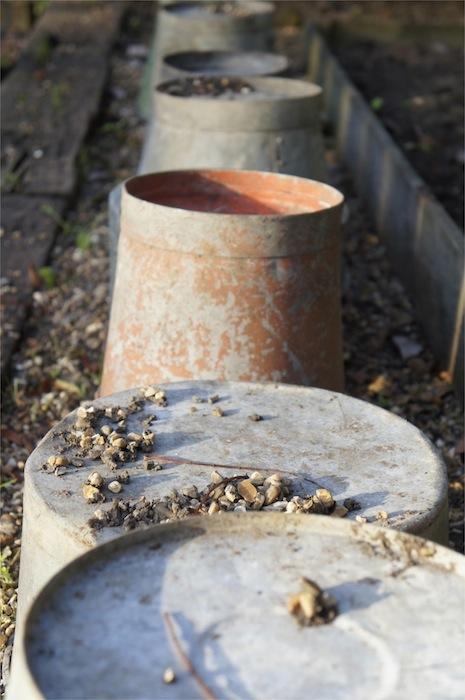 Garden_Style_Tin_Buckets