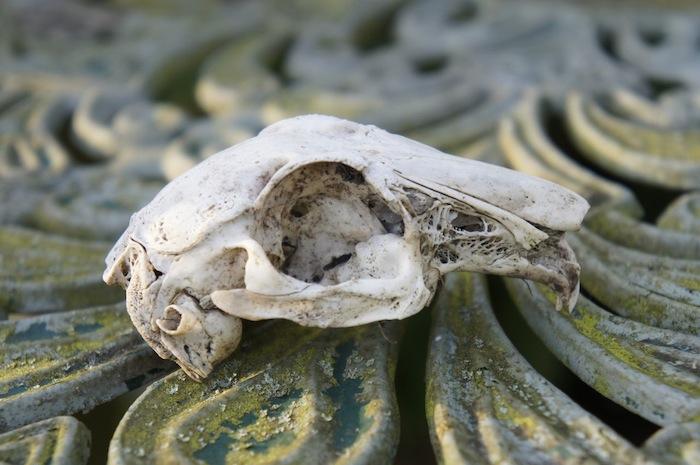 Garden_Style_Rabbit_Skull