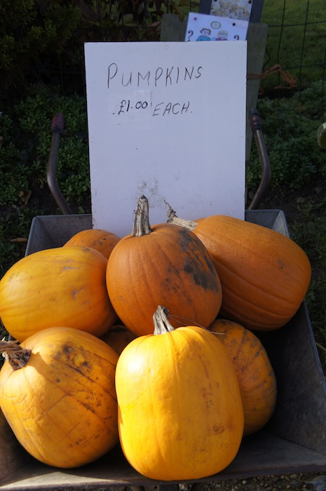 Country_pumpkins
