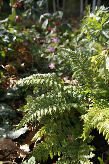 Fern_in_Autumn
